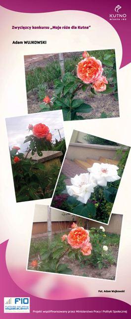 Images: tablice 1-20_Strona_15.jpg